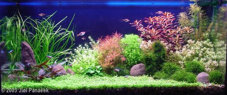 2003 AGA Aquascaping Contest - Entry #25
