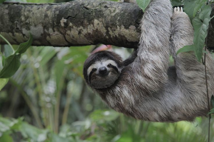 10 experiences you can only have in Costa Rica