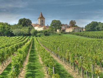 French vineyards in the Bordeaux wine region of Blaye. Pic by michael clarke stuff.