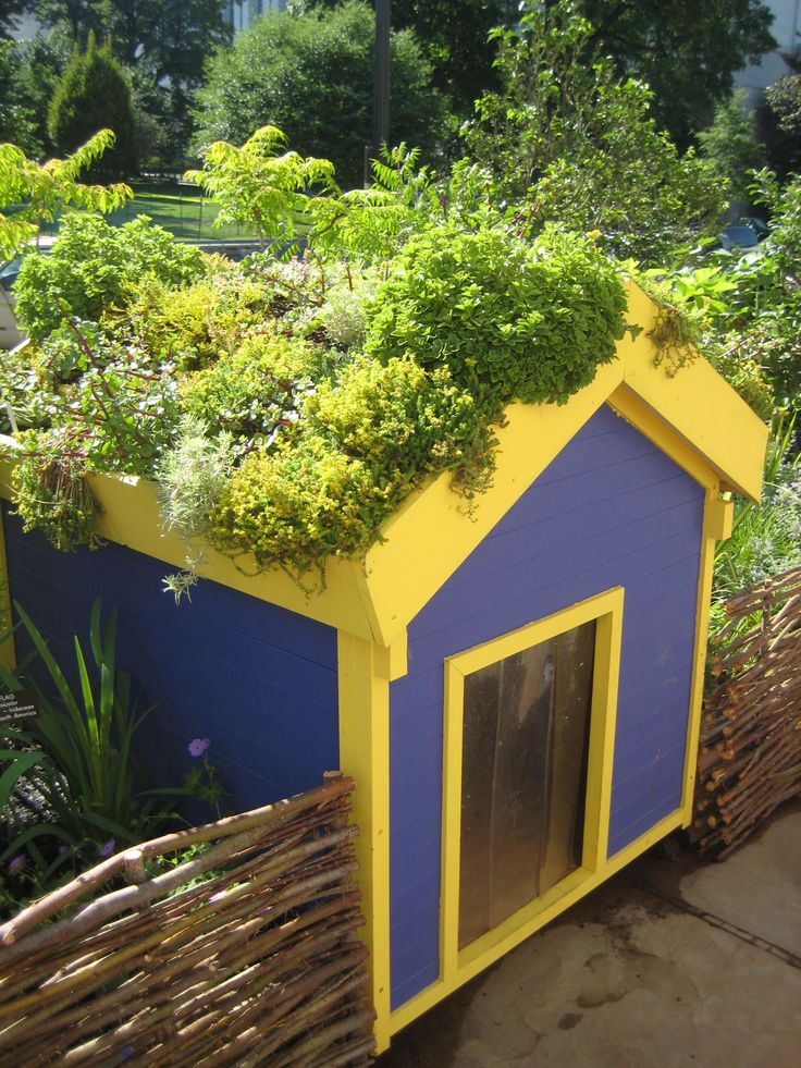 a gardeners travelogue roof gardens dog houses and a dog