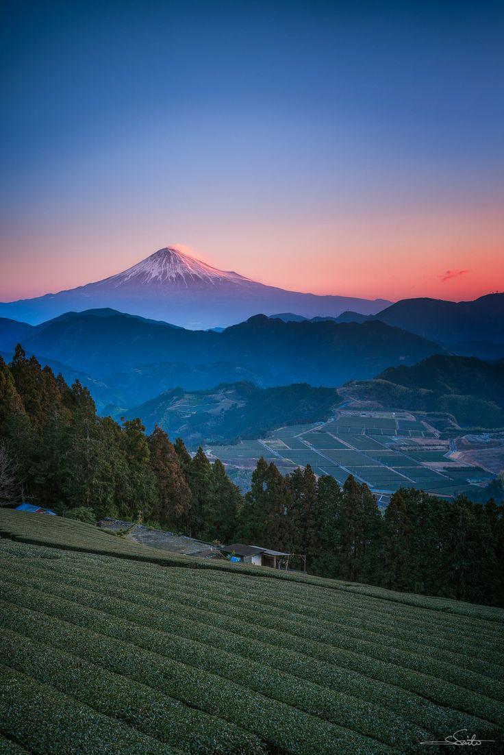 Mt. Fuji and tea plantation, Shizuoka, Japan © Shumon Saito 茶畑と富士山