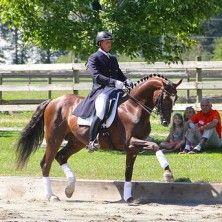 DREAMMASTERS SOHN DMV - 2015 - Chestnut Gelding  #equestrian #warmbloods #hanoverians #horses
