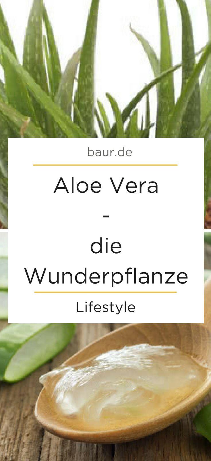 Die Wunderpflanze Aus Den Eigenen 4 Wanden Die Aloe Vera Pflanze Auch Echte Aloe Genannt Ist Nicht Nur Aloe Vera Pflanze Aloe Vera Pflanze Pflege Aloe Vera