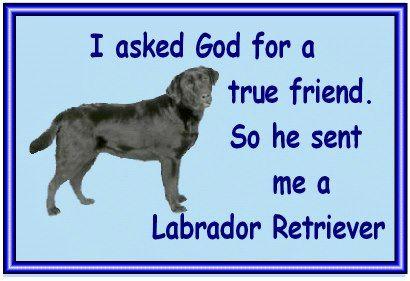 Labrador Retriever - A true friend!