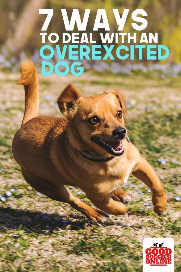 An Overexcited Dog Can Be Calmed Using These Dog Training Tips To