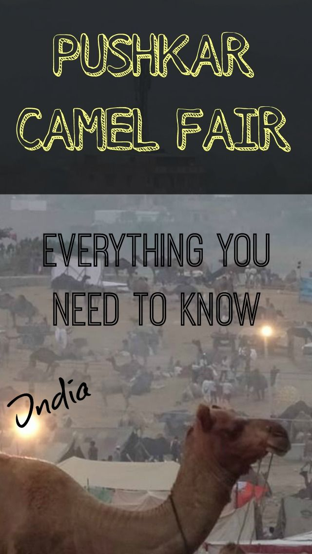Everything you need to know about Pushkar camel fair India.  India – the colors, spices, culture and religions all blend together into one incredible country like no other. Don't be put off about the rumors about Delhi Belly (although they are all true), India is the country to hit right now. http://www.divergenttravelers.com/pushkar-camel-fair-india/