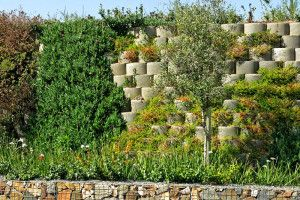 Plants for a softening/greening effect