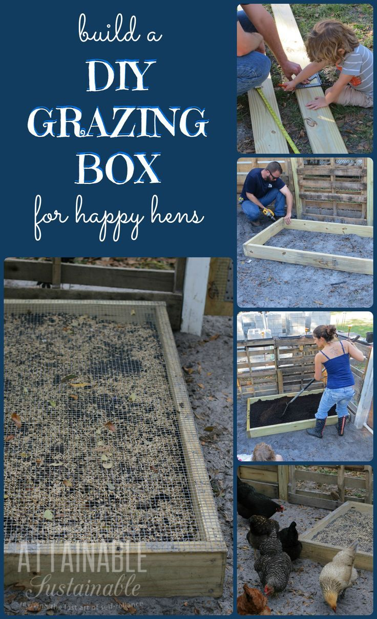 DIY grazing boxes make for happy hens.  They're a great way to save on the cost of raising backyard chickens (and other poultry), too!