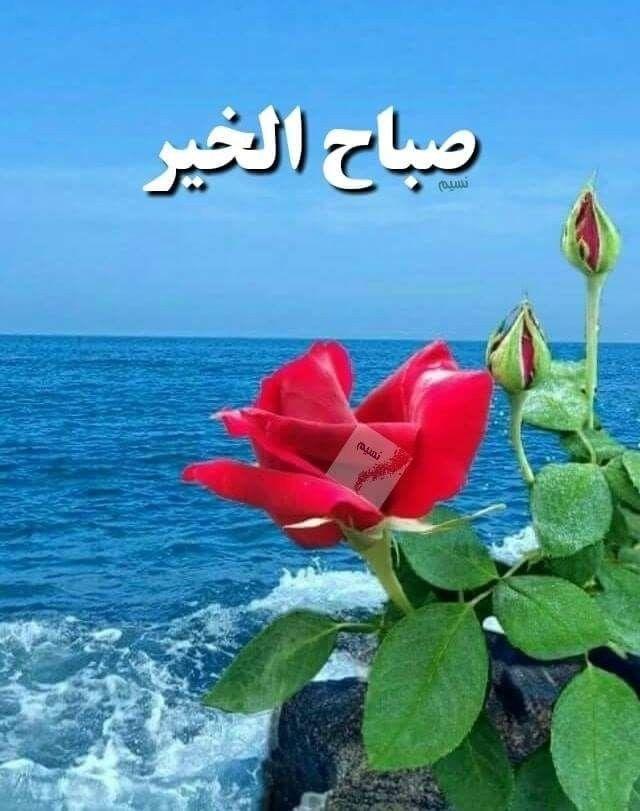 صباح الخير صباح الأشياء الجميله صباح الإيمان الذي ي زيل الألم صباح راحة البال التي نطلبه Good Morning Arabic Good Morning Images Beautiful Morning