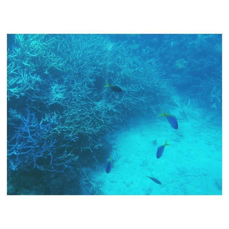 うみー 潜ったら綺麗かった この時期は雨季で 雨が降ったり止んだりだったのが ちょっと残念やけど... でも ウミガメに会えたから満足   #cairns #australia #ocean #sea #greatbarrierreef #beautiful #trip #オーストラリア #ケアンズ #海 #きれい by anier.k http://ift.tt/1UokkV2