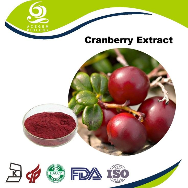 Chinese Herb Medicine Cranberry Extract Blushwood Berry Extract