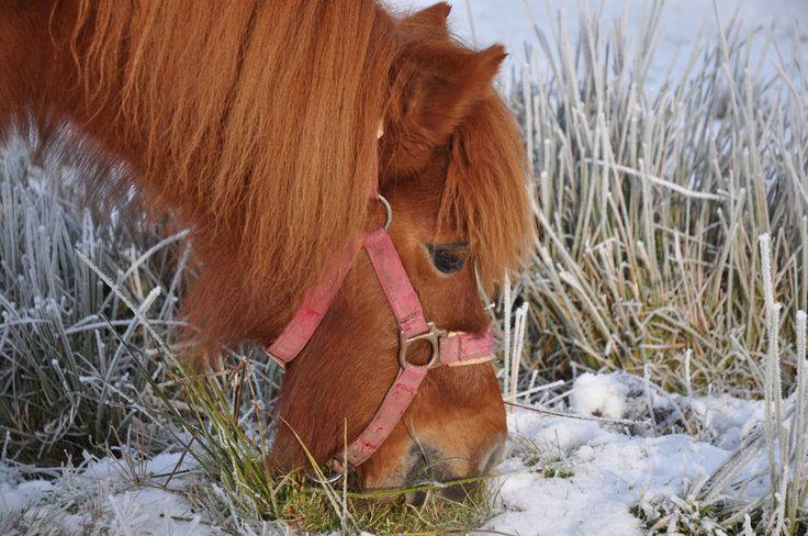 Paard - Horse ©gk24