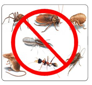 We have a team of specialists for each category, such as termite specialists dealing with different types of termites.
