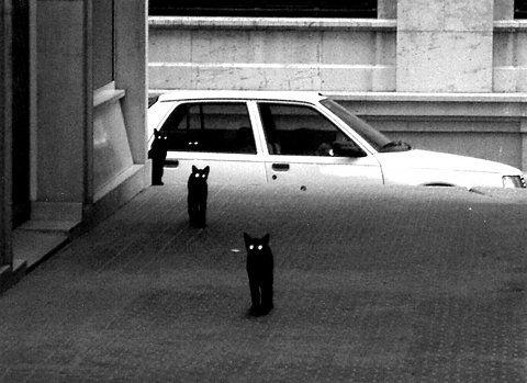 Black Cats: Creepy, Animals, Black Cats, Posts, Funny Stuff, Funny Animal, Kitty, Photo, Eye