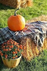 Image result for fall bonfire party ideas