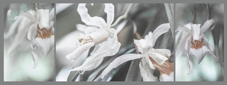 Silver Melody. Triptych by Jenny Rainbow