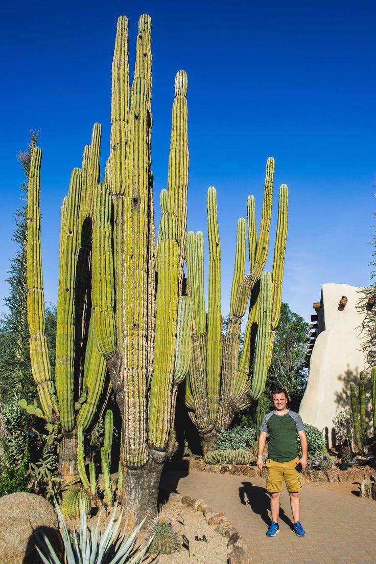 The Desert Botanical Garden had cacti bigger than a house