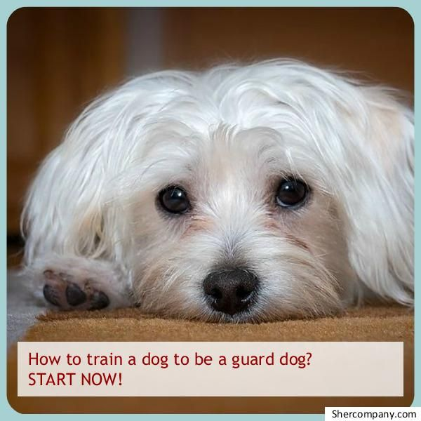 Benefits And Tips For Successful Dog Training Dog Training