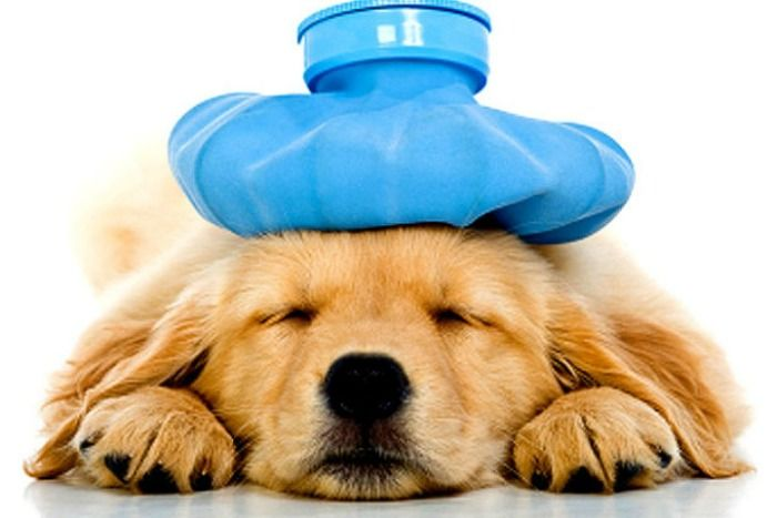 Here are the four top perils to your dog's health and what you can do to prevent them from hurting your best buddy.