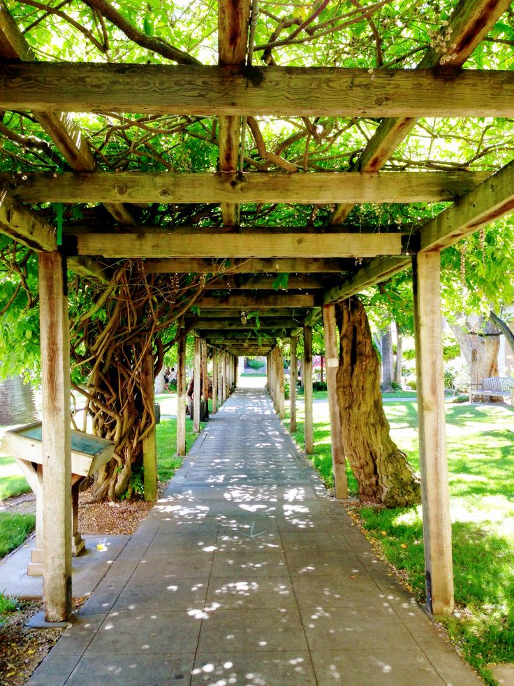 My favorite place on campus. The pathway under the wisteria in the Mission Gardens - Santa Clara University