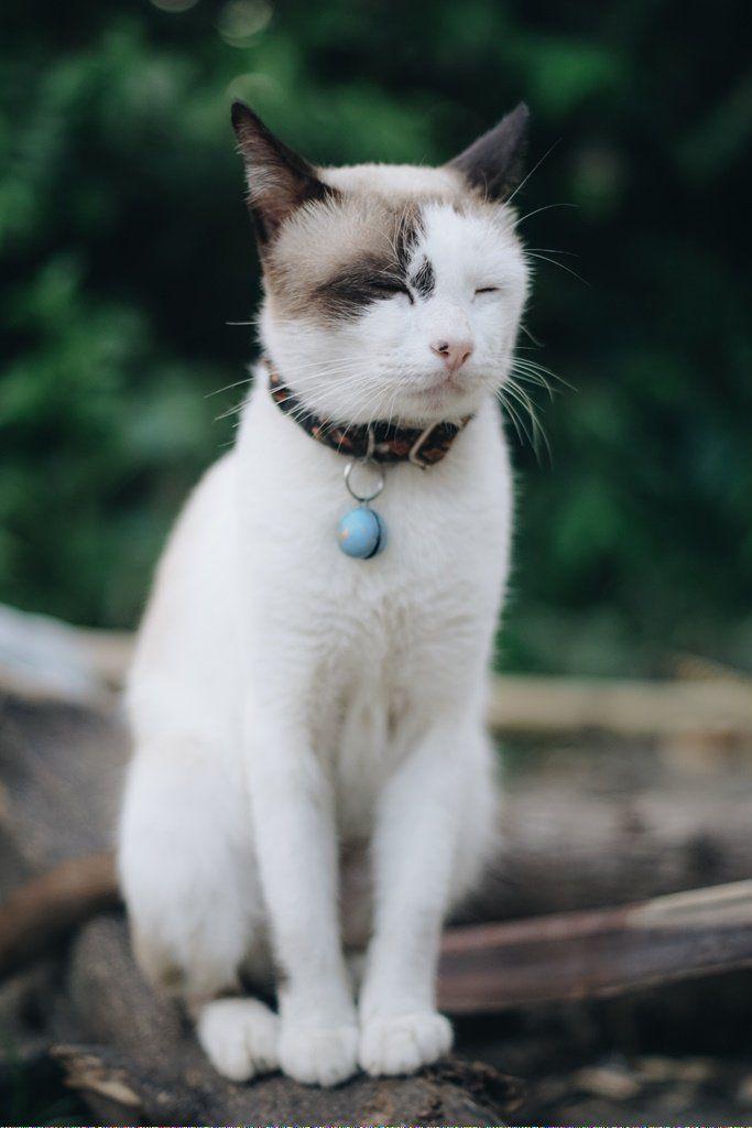 Cats Craigslist Catsthirdeyelid Code 466351824 Cat Adoption Cat Breeds Cats
