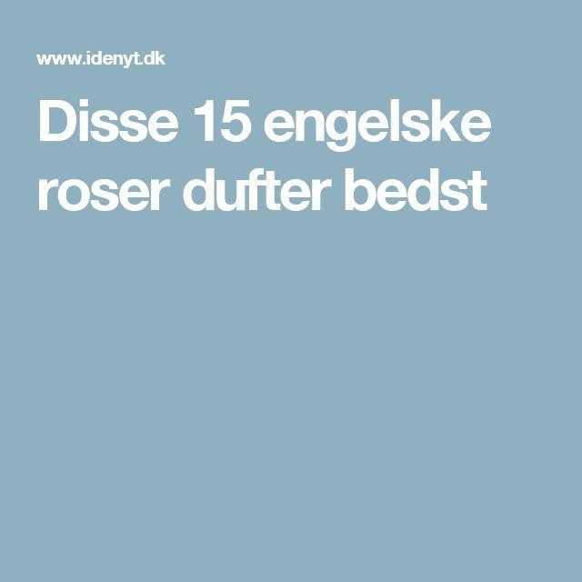 Disse 15 engelske roser dufter bedst
