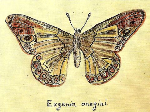 The Paradox of Intellectual Promiscuity: Stephen Jay Gould on What Nabokov's Butterfly Studies Reveal About the Unity of Creativity | Brain Pickings