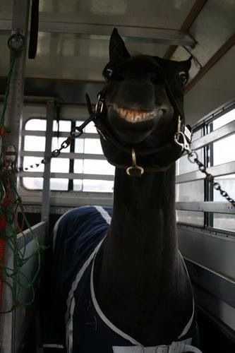 Lmao I actually laughed out loud. All I can think of is Sid from ice age haha. Funny #horse #pictures