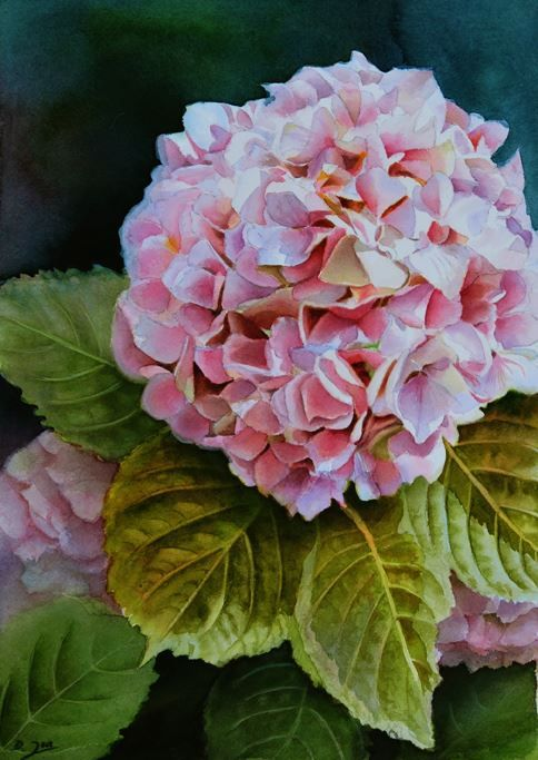 Print of a wonderful Pink Hydrangea Painting in watercolor is available. Doris Joa paints in a realistic styles. Get this Pink Hydrangea Print now.