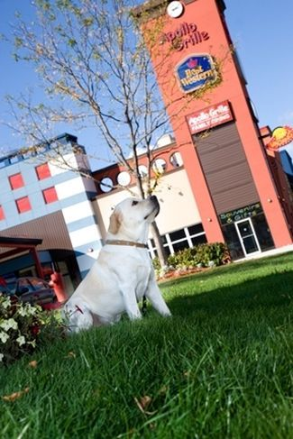After A Long Fun Day Stay At The Dog Friendly Best Western Fallsview In