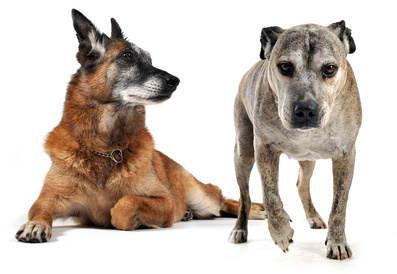 What Causes Arthritis in Dogs? What are the Symptoms? How is Arthritis in Dogs Treated? How Can I Prevent Canine Arthritis?