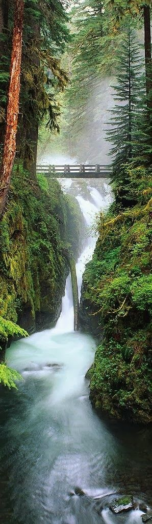 Olympic National Forest, Washington right here on my peninsula...