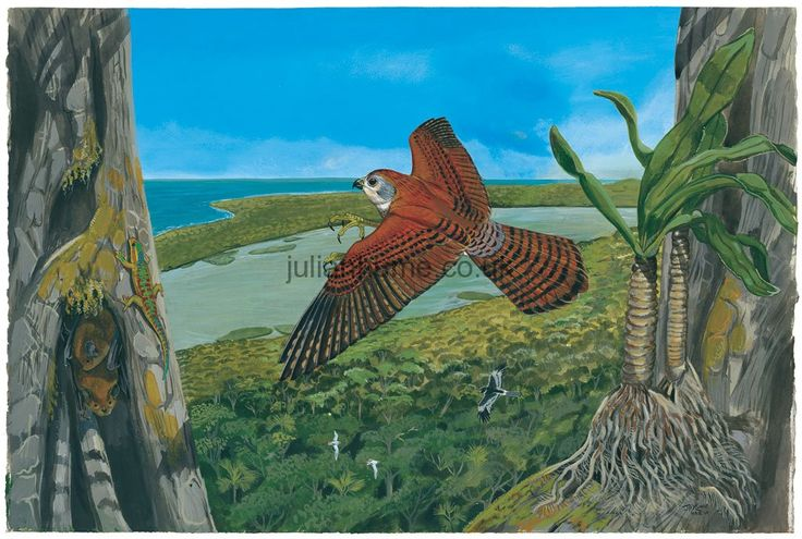 Reunion Kestrel (Falco duboisi)    (Extinct 1674) hunting a Manapany Day Gecko  while Grey Tomb Bats roost in a tree cavity; White-tailed Tropicbirds  and a Réunion Harrier  fly over the forest canopy. The spectacular Palm Orchid  has not been seen since the 1980s and may well be extinct.