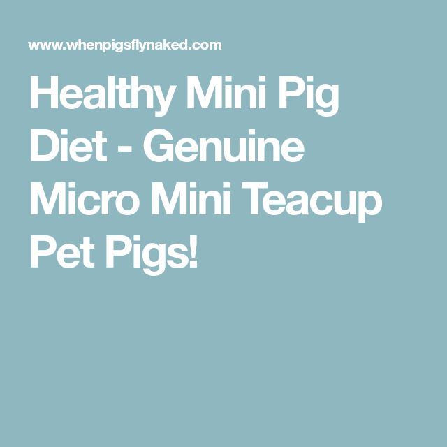 Healthy Mini Pig Diet - Genuine Micro Mini Teacup Pet Pigs!