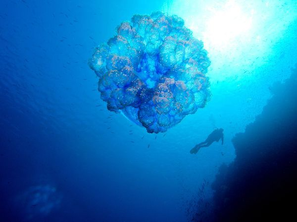 South Pacific Photos -- National Geographic #NatGeoWanderListContest