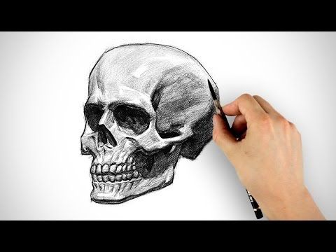 Learn anatomy with memory techniques videos