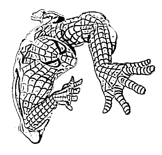 spidermand fifi coloring pages - photo#49