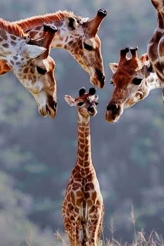 """Don't let the noise of others' opinions drown out your own inner voice."" ❣ Family of Giraffe"