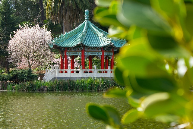 Chinese Pagoda in Golden Gate Park