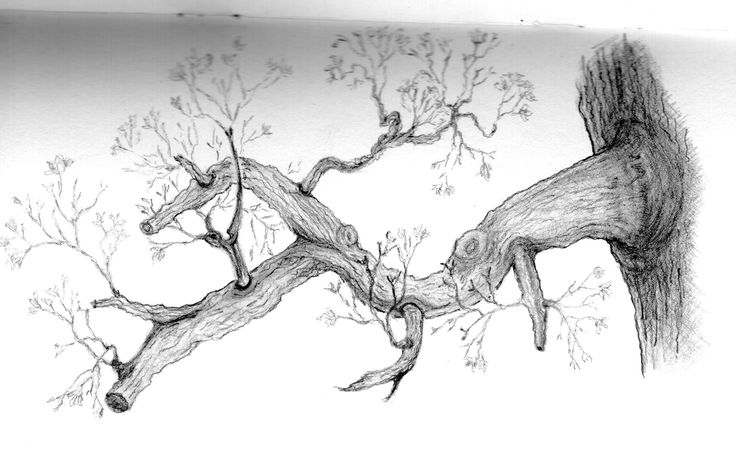 Tree Drawing With Branches Tree drawing with branches ...