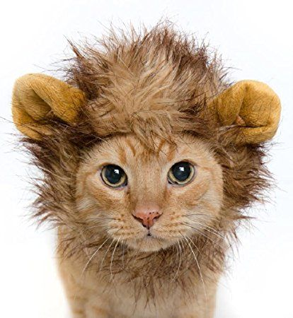 Lion Mane Costume for Cats & Dogs – FREE Feathered Catnip Toy Included – Cute Halloween Pet Costume for Yorkies, Maltese, Puppies, Cats, & Kittens     Affiliate Link