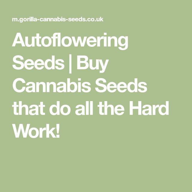 Autoflowering Seeds | Buy Cannabis Seeds that do all the Hard Work!
