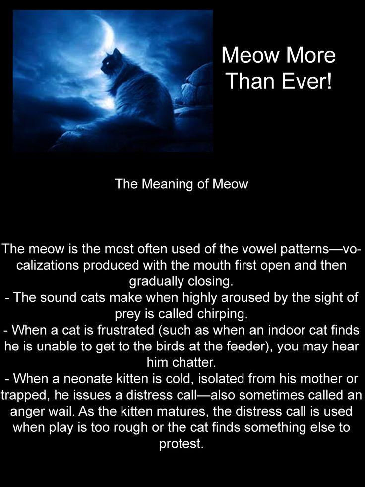 Cat Vocalization