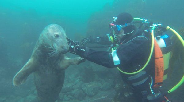 These Divers Went To Film a Group of Seal Pups, But They Never Expected THIS To Happen! Amazing!