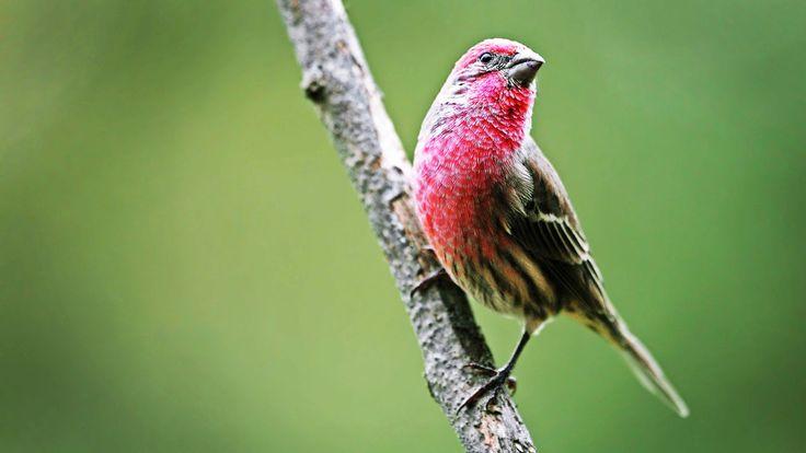 Finch Bird House