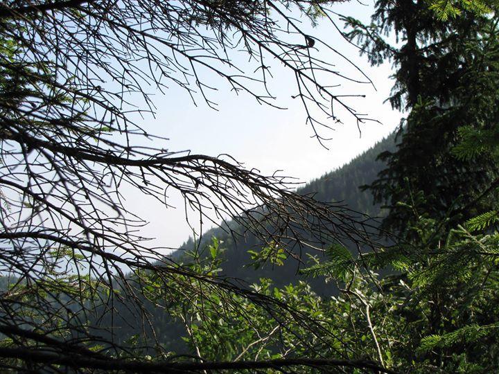 Landscape in Carpthian Mountains