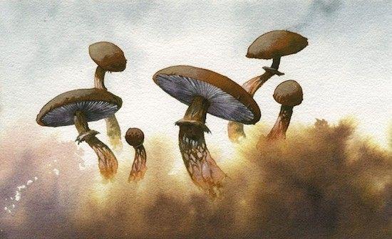 El sueño de los hongos: científicos develan cómo la psilocibina expande la conciencia