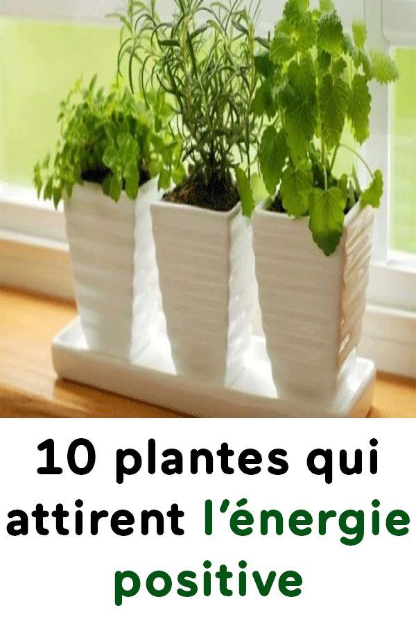 10 plantes qui attirent l nergie positive astuces plante porte bonheur plante interieur et - Plante d interieur porte bonheur ...