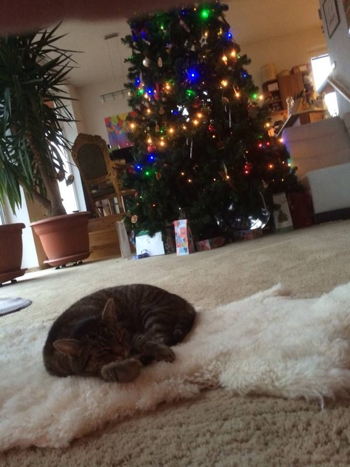 Kitikat is dreaming about Christmas :)