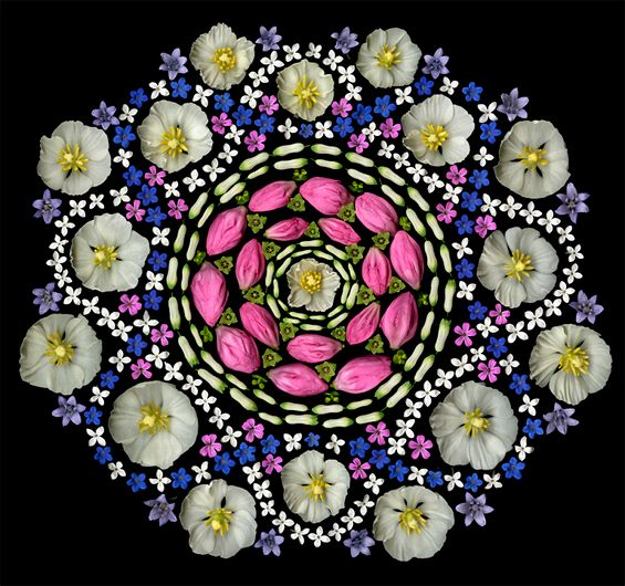 Portia Munson's Scanned Flower Mandalas And Reflecting Pool At P.P.O.W | Beautiful/Decay Artist & Design #flower